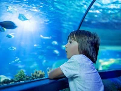 kid at aquarium