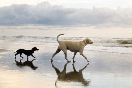 dogs-on-beach