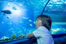 kid at aquarium